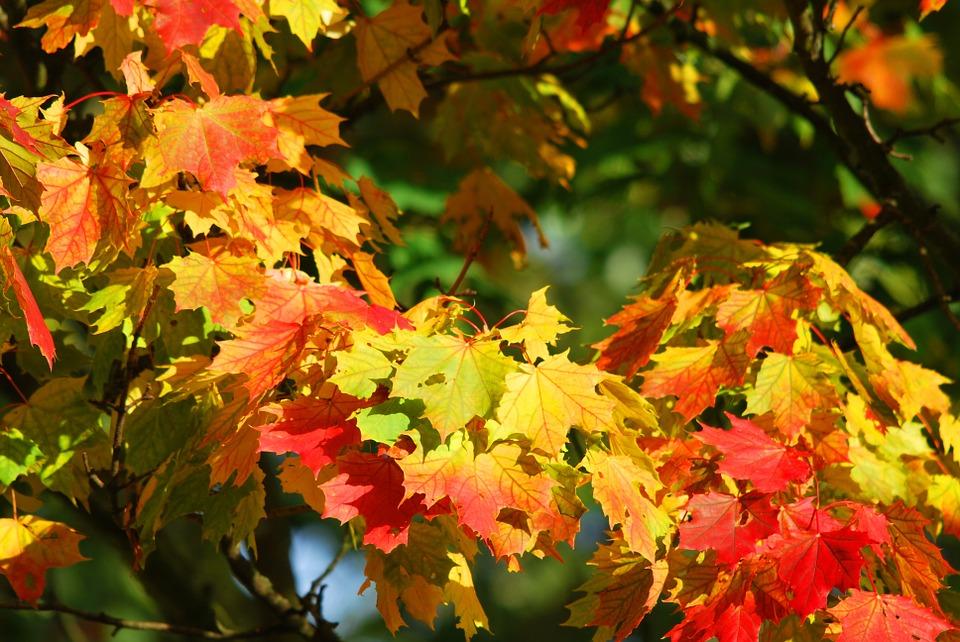 autumn-209479_960_720.jpg