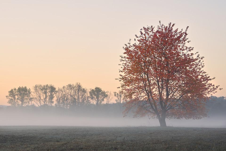 autumn-3757527_960_720.jpg