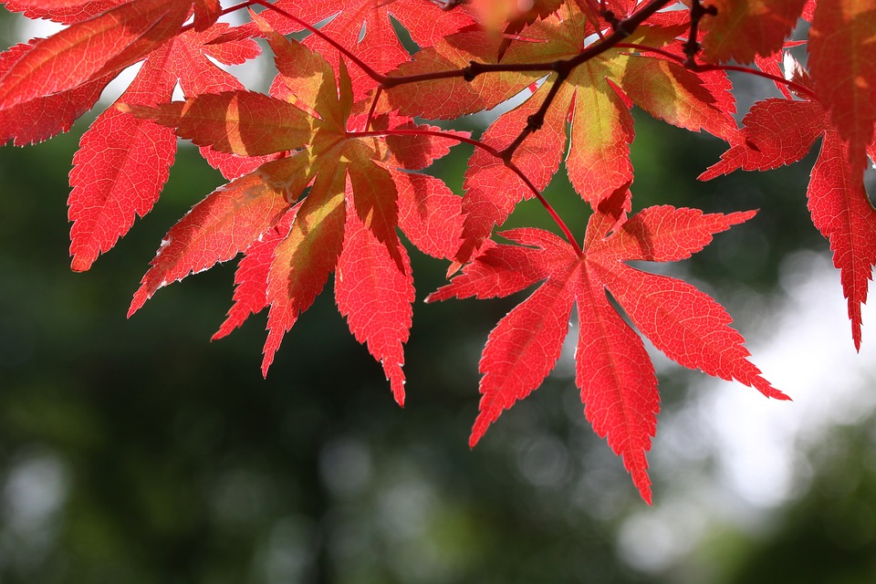 autumn-leaves-3576460_960_720.jpg