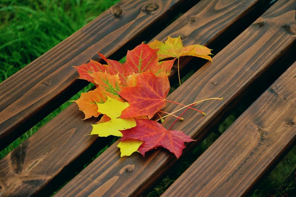 fall-foliage-1740841_960_720 (1).jpg