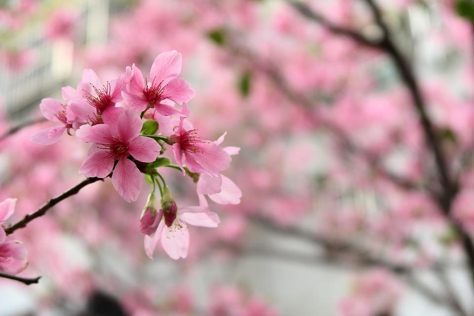 flower-3243753_960_720.jpg