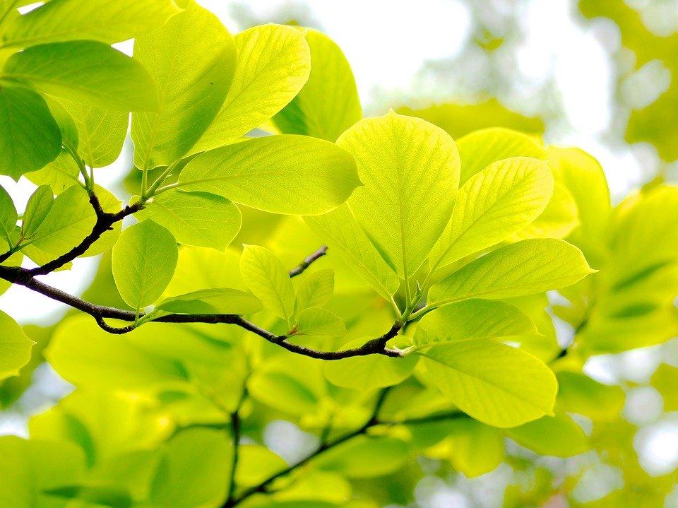 fresh-green-2490820_960_720.jpg